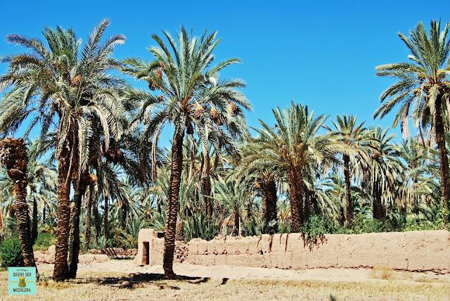 Palmeral de Tamnougalt, Marruecos
