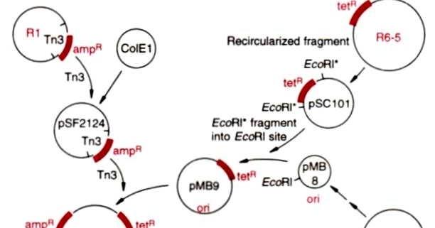 Cloning vector based on E.coli ~ Bio-Tech HelpLine