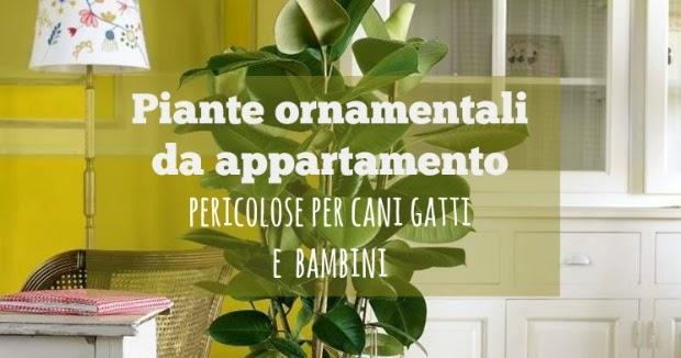15 piante da appartamento velenose per bambini cani e for Piante velenose per i gatti