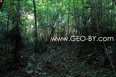 Лес у деревни Криницы