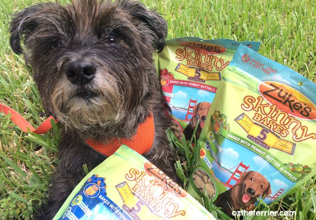 Oz with Zuke's 5-calorie Skinny Bakes dog treats