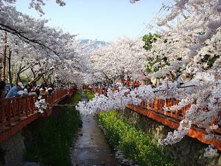 Jinhae Gunhang Festival on April