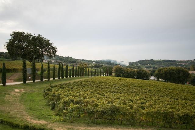 Azienda vinicola Fontezoppa
