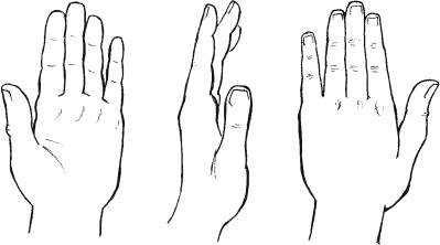 Liam Roberts BAGD YR2: Arm Anatomy Reference