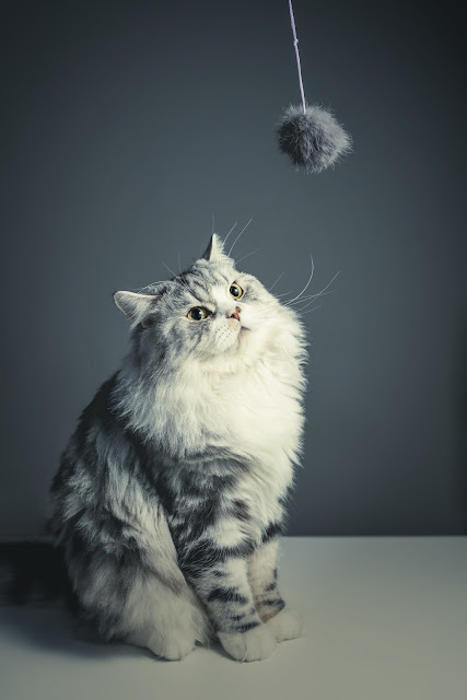 cat playing with ball image