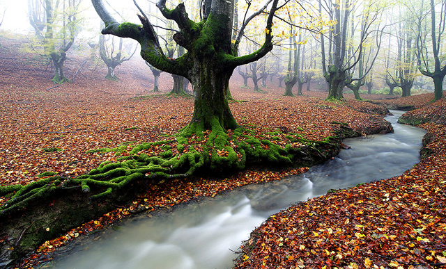 İspanya'da yosun kaplı orman