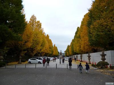 靖国神社の銀杏並木