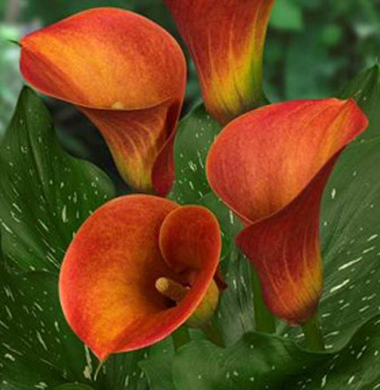 Beautiful Flowers | The Real Myfarm