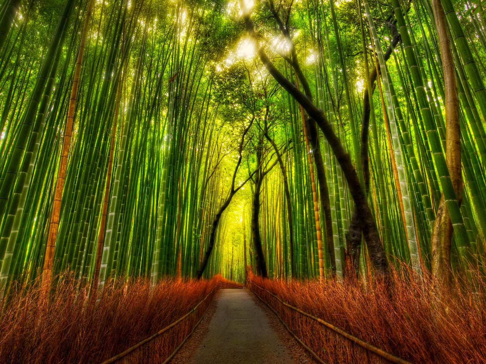 Wallpapers Bamboo Forest Wallpapers