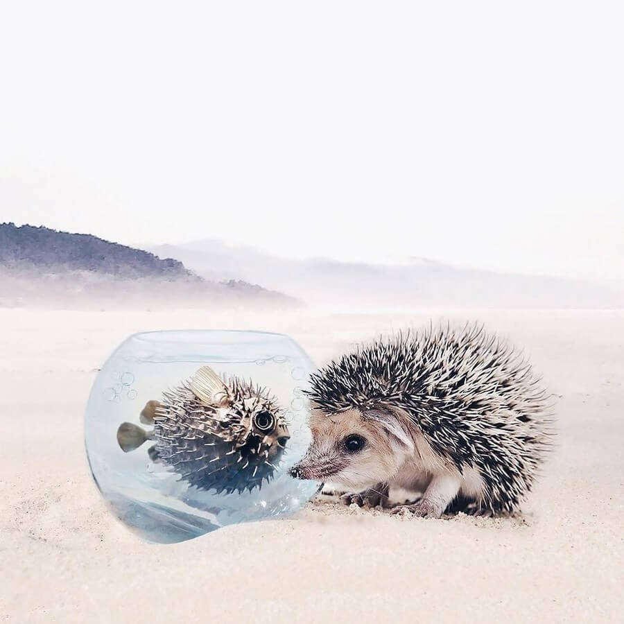 02-Hedgehog-and-Pufferfish-Luisa-Azevedo-www-designstack-co