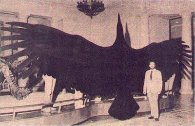 Fotografía ave gigante Argentavis magnificens