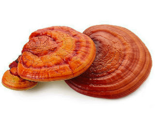 You can find Reishi (Ling zhi) easily in any chinatown