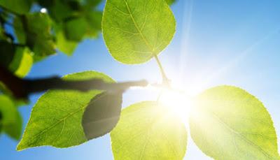 Come comunicano elettricamente le piante
