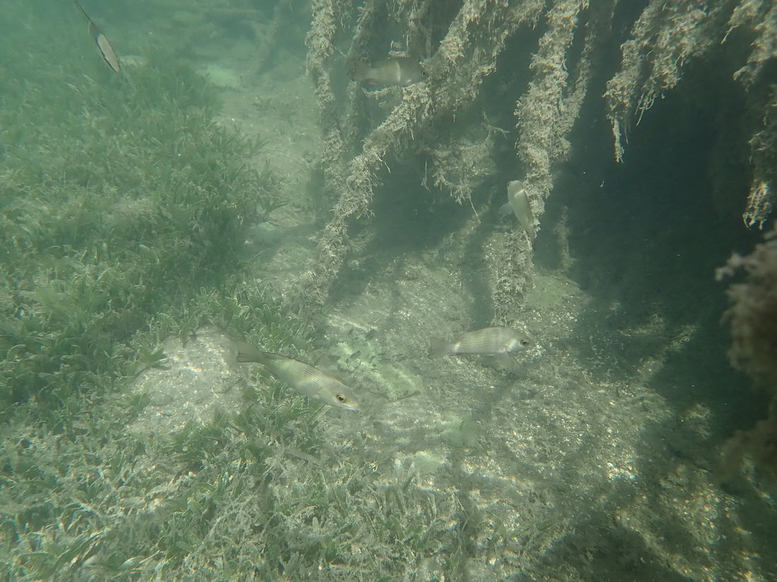 tropical fish in Cas Cay