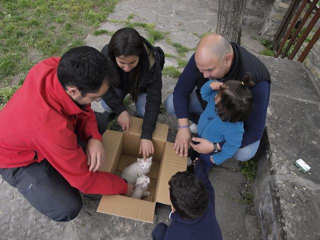 Gatos de Casa Lanau