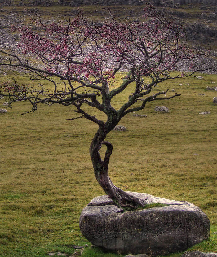 17 Pictures Of Trees That Prove The Miracle Of Life - Nature FTW