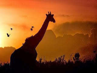 silueta-de-una-jirafa