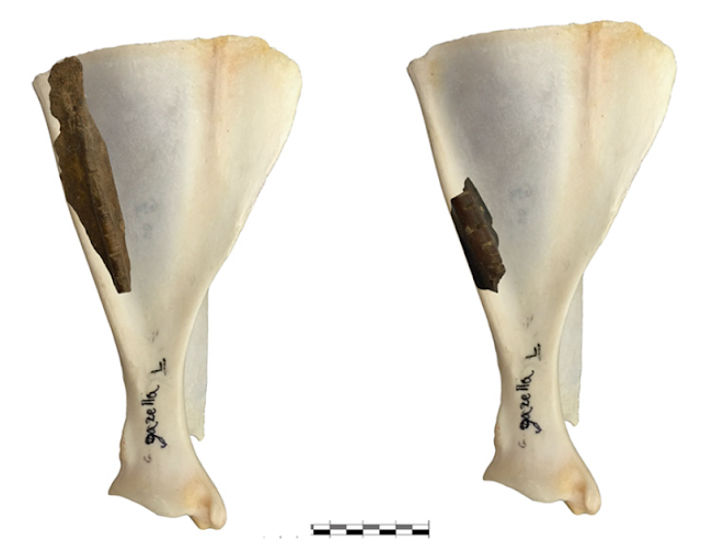Unique grooves carved into deer bones 35,000 years ago in a cave in Galilee