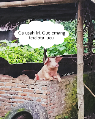 Buatlah Seseorang Bahagia Hari Ini (Belajar Dari Babi)