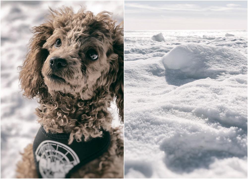 talvi, valokuvaus, ranta, lumi, jää, beach, winter, valokuvaus, valokuvaaminen, Porvoo, Emäsalo, Suomi, Finland, nature, Visualaddict, valokuvaaja, Frida Steiner, villakoira, dog