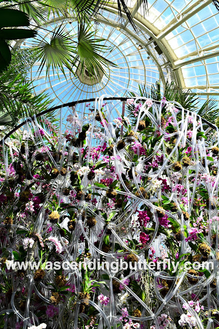 Orchid Flower Wall Installation at New York Botanical Garden Orchid Show 2018, Daniel Ost, Enid A. Haupt Conservatory, Flowers, Flower Wall, Orchid, Orchids