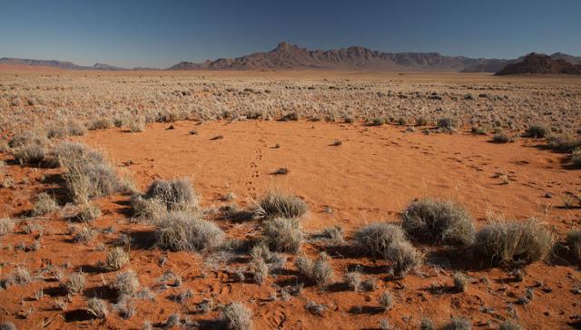 """Тайна появления """"ведьминых кругов"""" в пустыне Намиб раскрыта"""