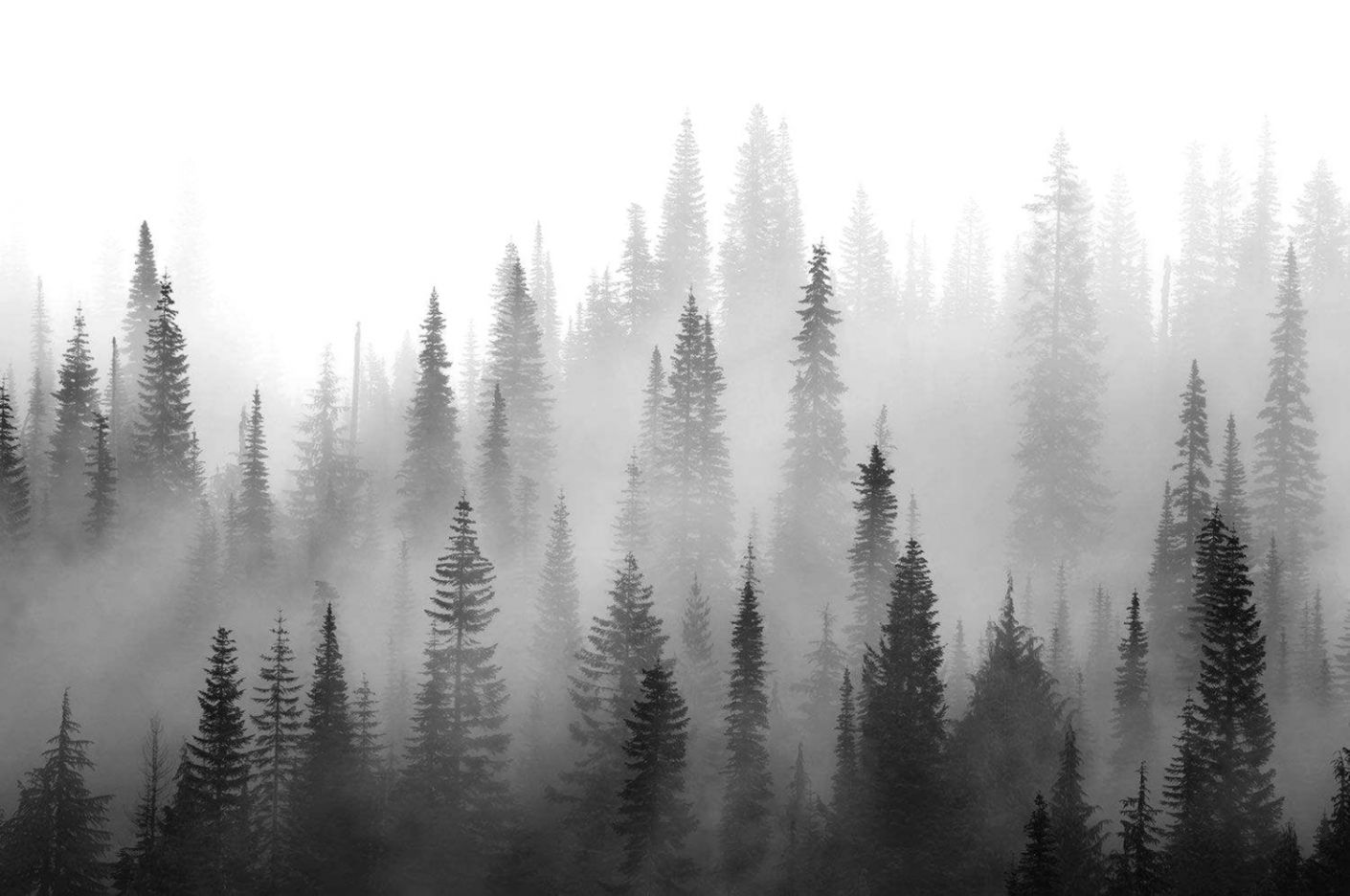 Black And White Forest Wallpaper Wallpapers Zones