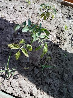 """Подкормки растений в июне / Блог """"Дача-это просто!"""""""