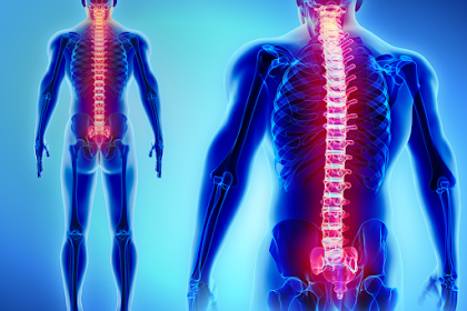 Spinal Cord Function And Important Parts