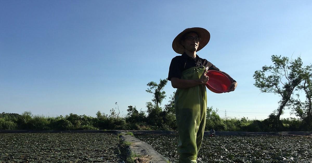 台南官田旅遊推薦 友菱友雉遊官田小旅行 體驗採菱角的樂趣