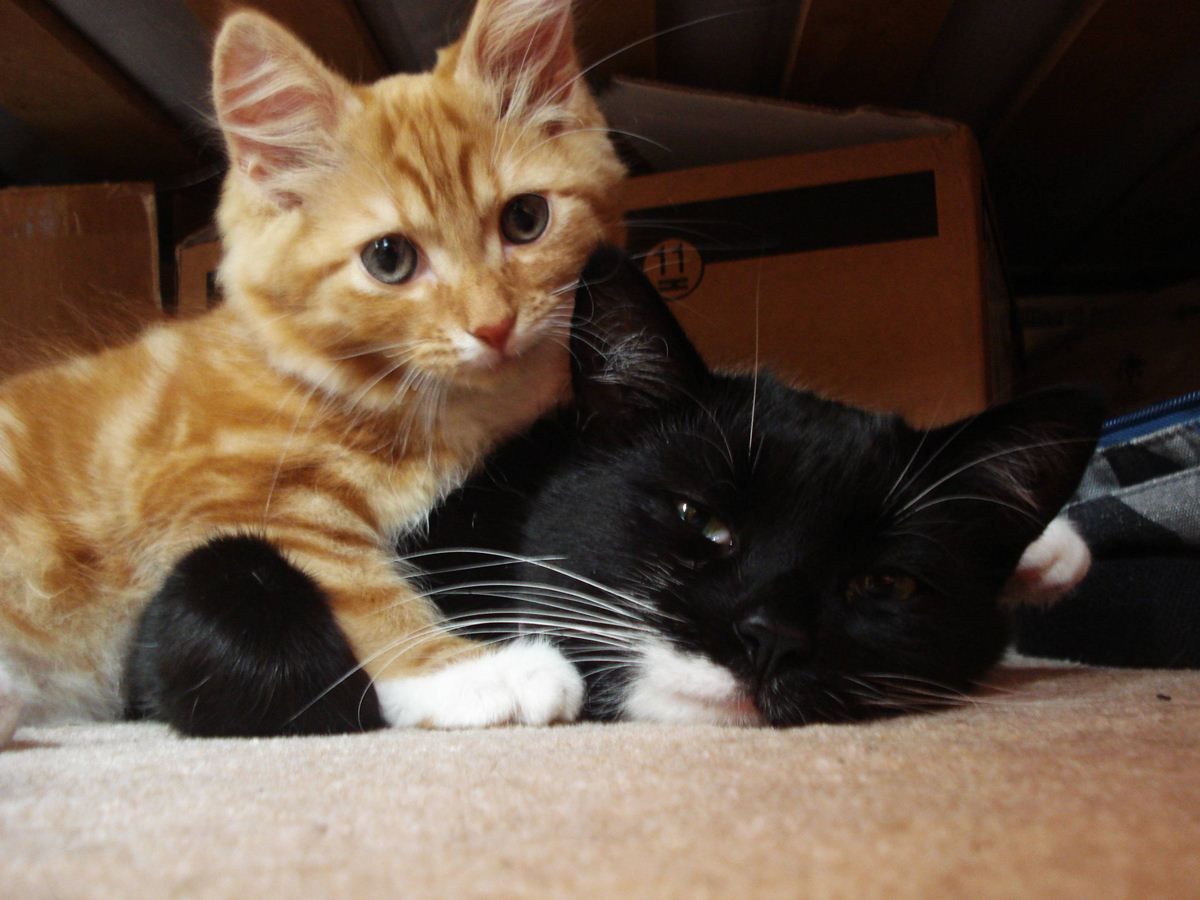 Funny cats - part 57 (30 pics + 10 gifs) | Amazing Creatures
