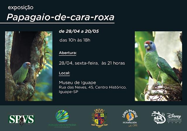 """Acontece na cidade de Iguape a exposição """"Papagaio-de-Cara-Roxa"""", do fotografo Zig Koch"""