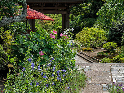 Garden of summer: Kaizo-ji