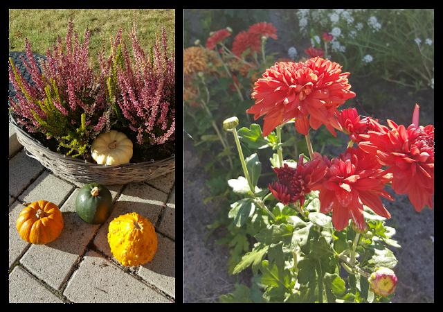 Herbst Blumen