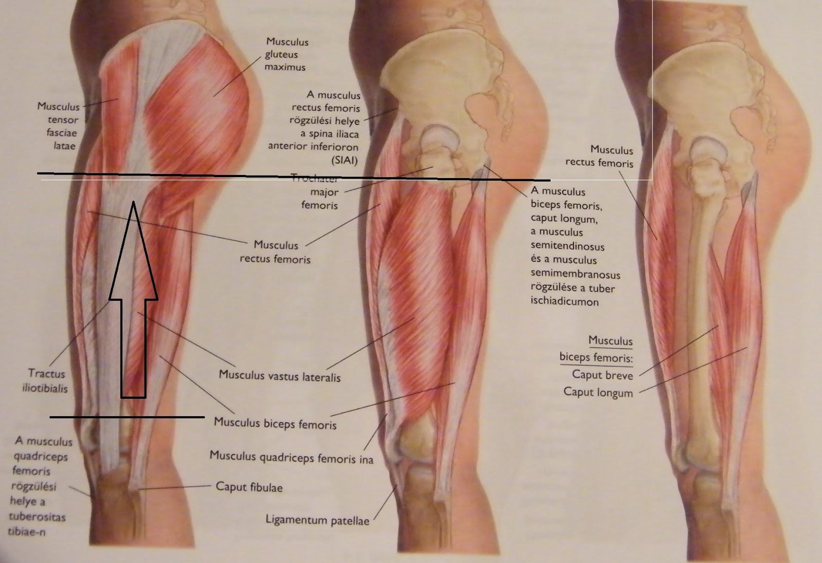 Bizonyított fájdalom a hátsó passzolásban)