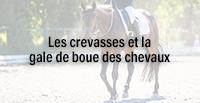 Les crevasses et la gale de boue des chevaux