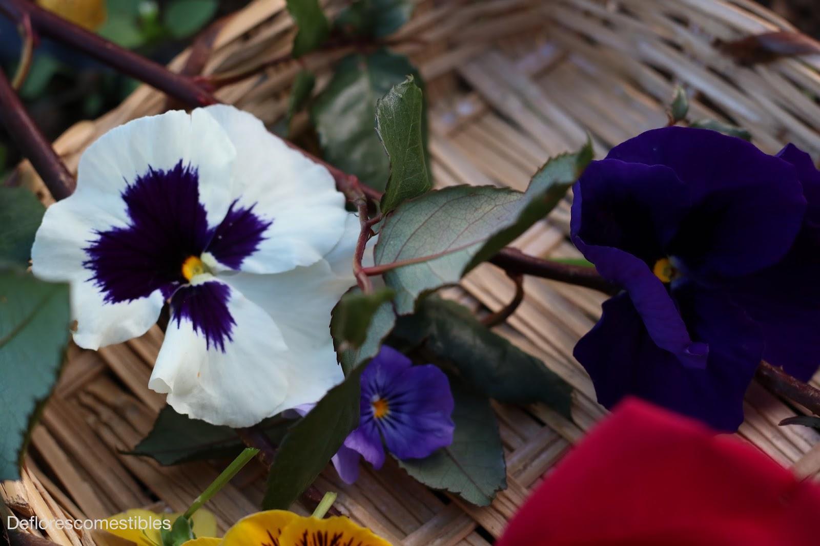 Pensamientos La Flor Comestible Que Mas Luce De Flores Comestibles