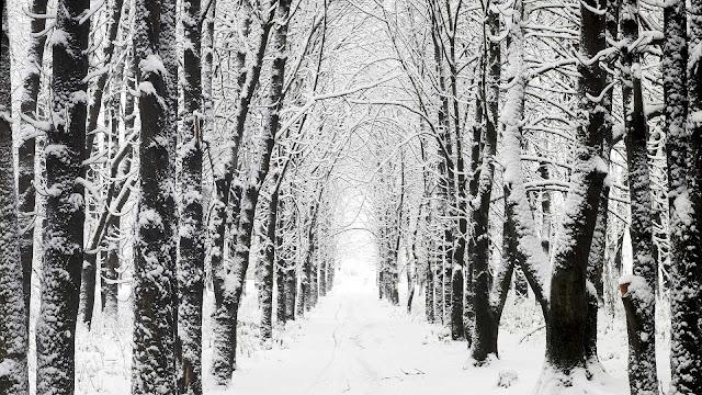 Een weg tussen de bomen bedekt met sneeuw