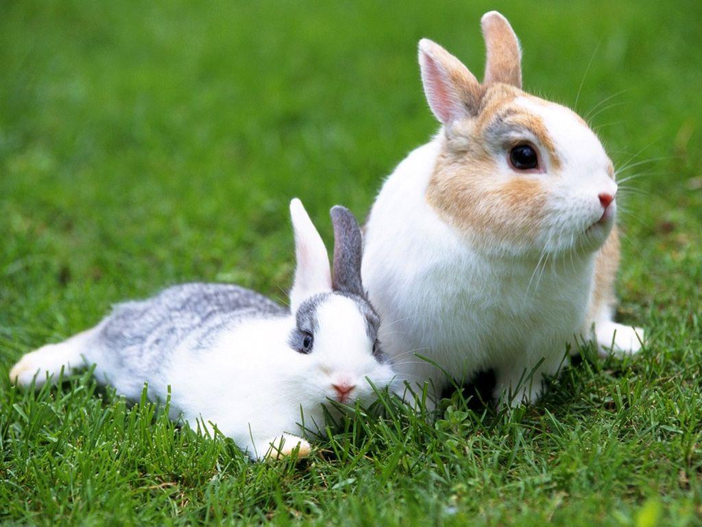 White Rabbit Latest Wallpaper   All Wildlife Photographs