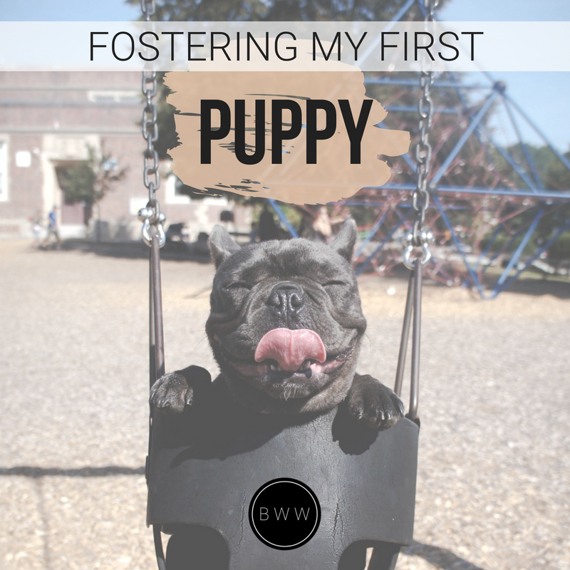 cute black french bulldog puppy on swing