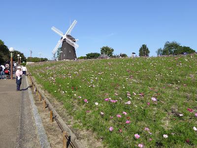 花博記念公園鶴見緑地のコスモス 西側