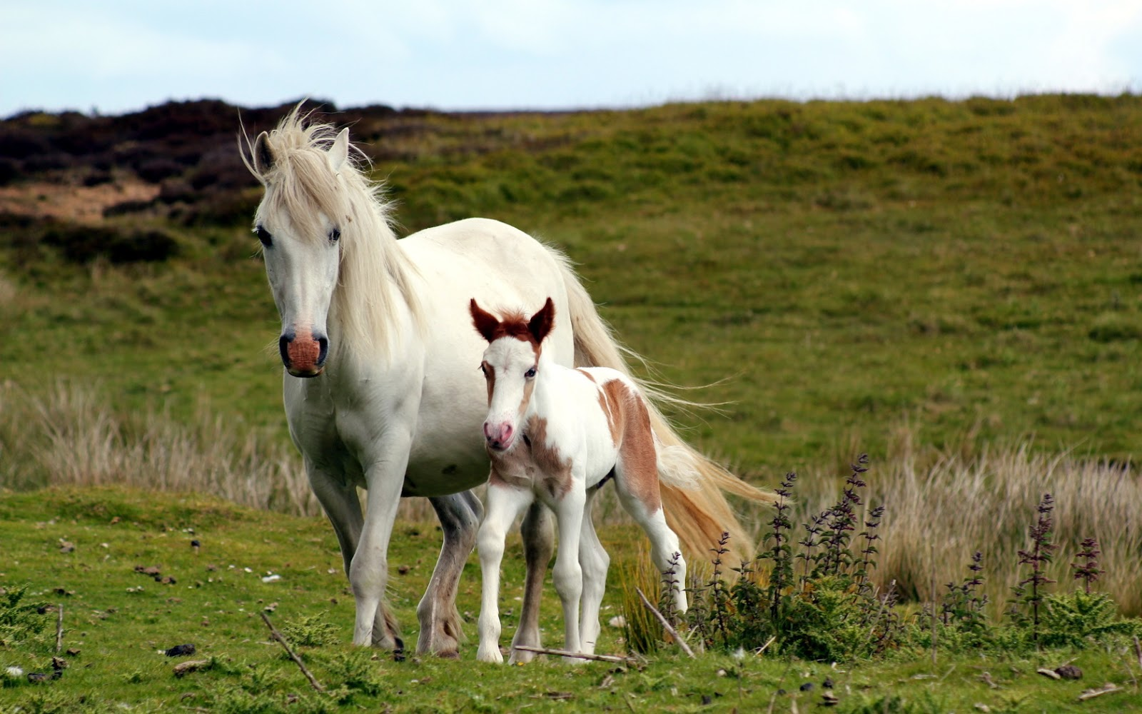 Entertainment Only Beautiful Horses Wallpapers