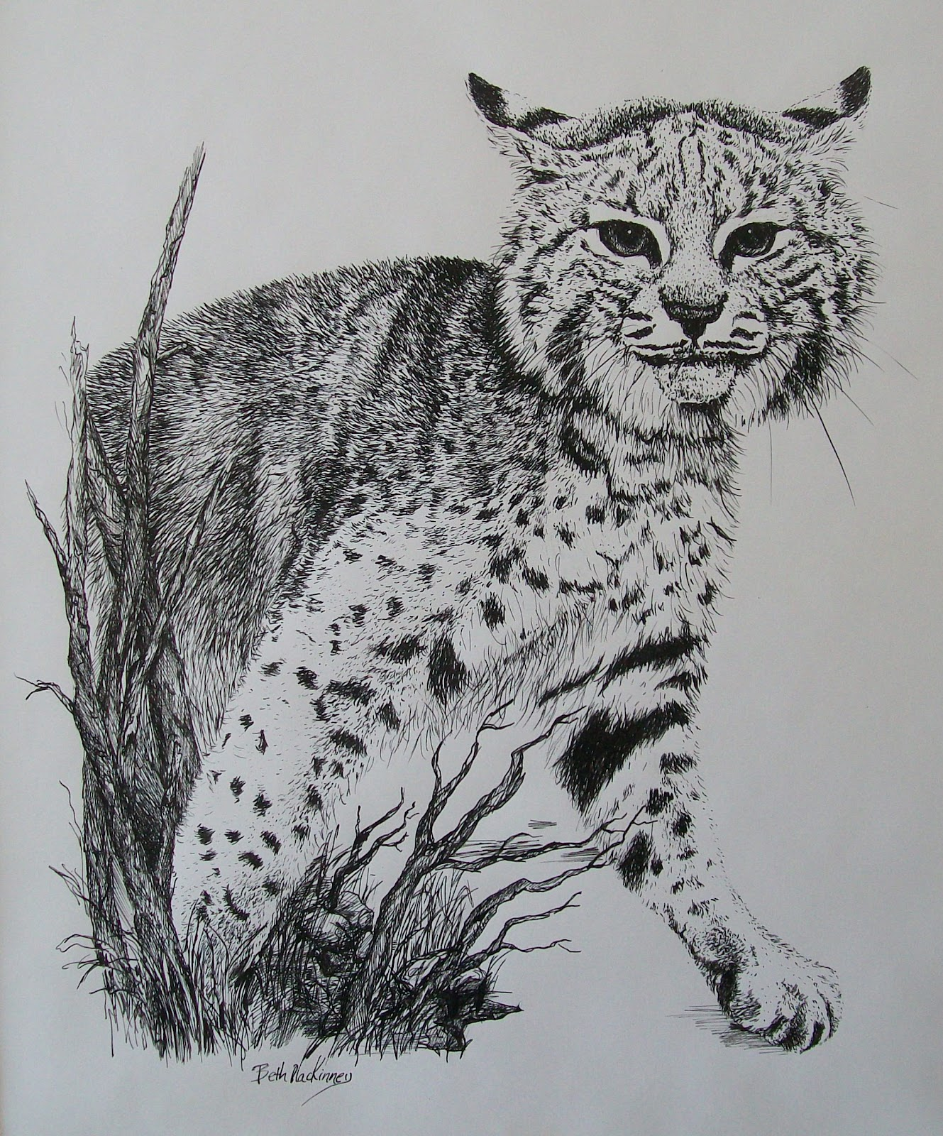 All Things Art: Pen and ink gallery