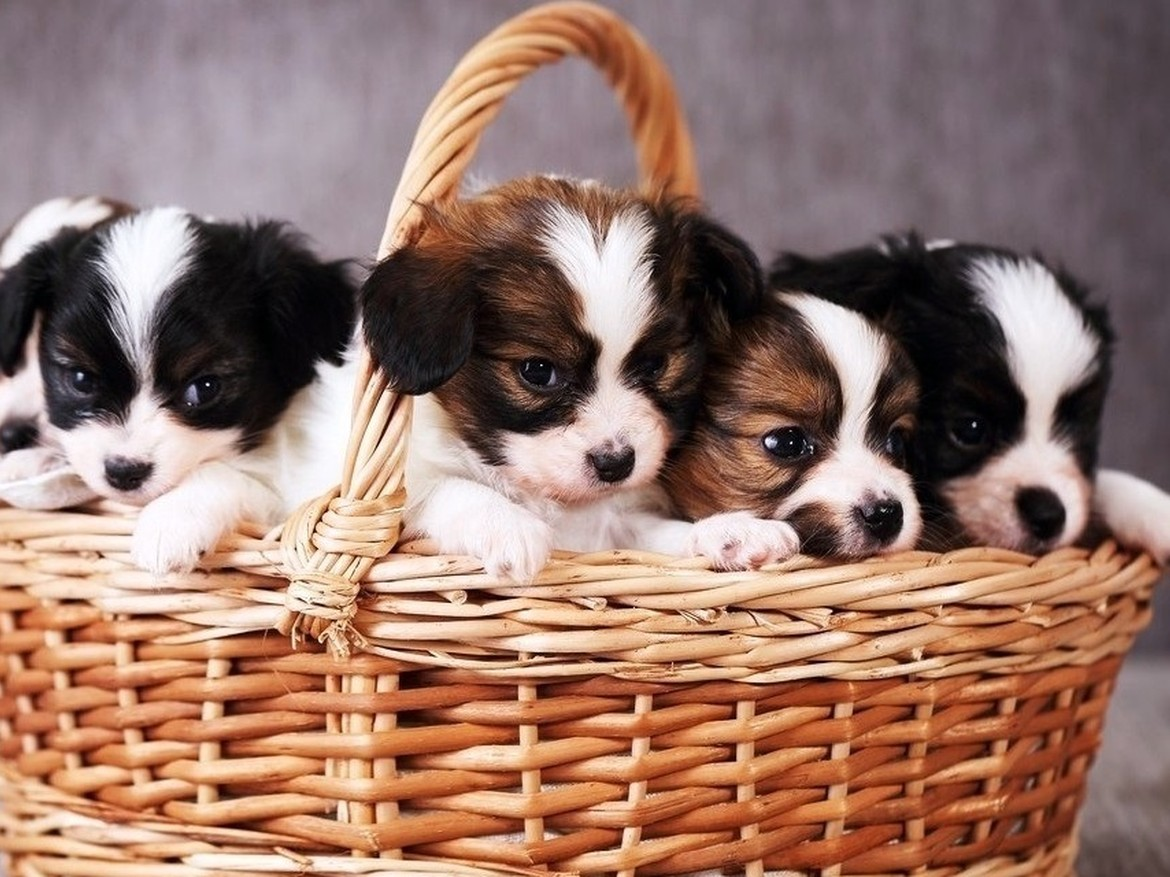 no pet store puppies day is july 21 every day is special july 21 no pet store puppies
