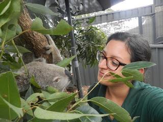 esperienza di volontariato al koala hospital di port macquarie