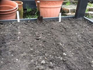 Carrot sowing