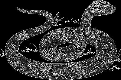 serpent/snake