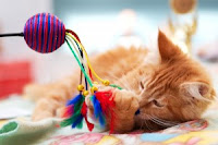 "An orange tabby kitten with a feathery ""bird"" toy"