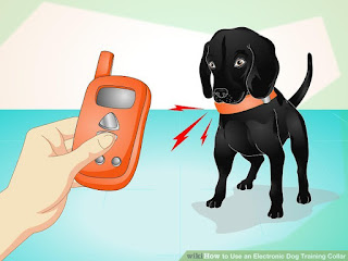 How to Use an Electronic Dog Training Collar