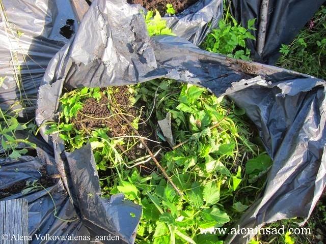 аленин сад, aleninsad, целина, весна, сныть, вьюнок, сорняки, борьба с сорняками, компост в мешках